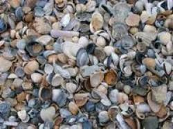 Ракушка морская декоративная, фракция 5-20 мм