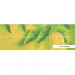 Фартуки Полноцветные гладкие ВИКТОРИЯ  847х2440х3,2мм Ц188