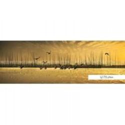 Фартуки Полноцветные гладкие ВИКТОРИЯ  847х2440х3,2мм Ц175